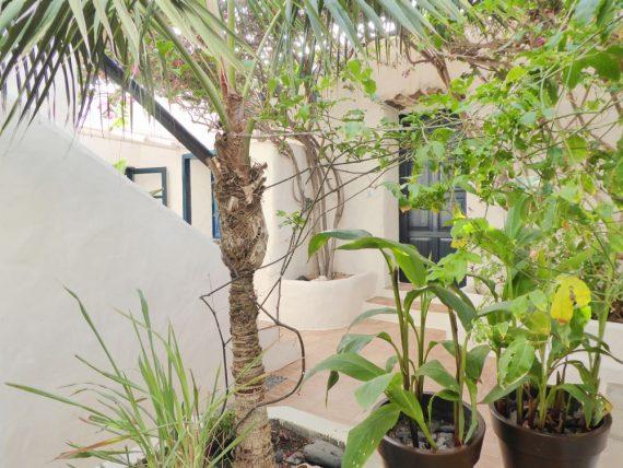 Finca Luciana - El Patio Patiobepflanzung