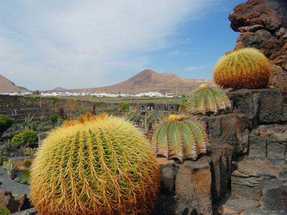 Guatiza Kaktusgarten